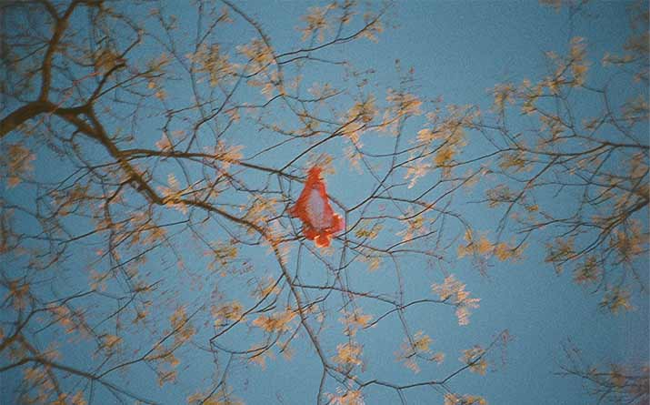 Inspiration Friday Lina Scheynius diary spring picture of a bright tree with red panties in the center igor and andre
