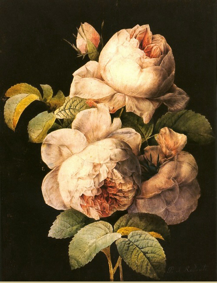 Inspiration friday painting is by 1700-1800 artist Pierre Joseph Redoute of pink roses with black background