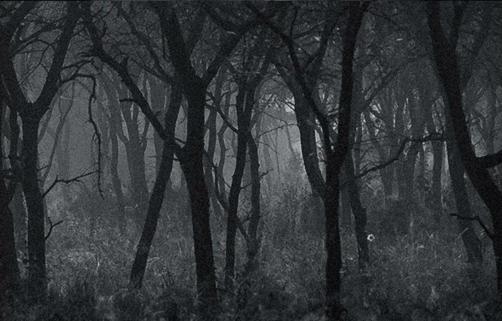 a Bw photo of a woods and forest
